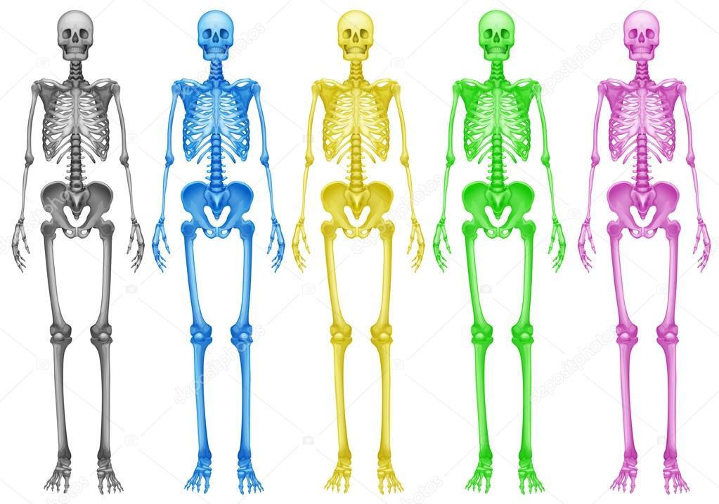 Esqueletos de colores — Archivo Imágenes Vectoriales © blueringmedia ...