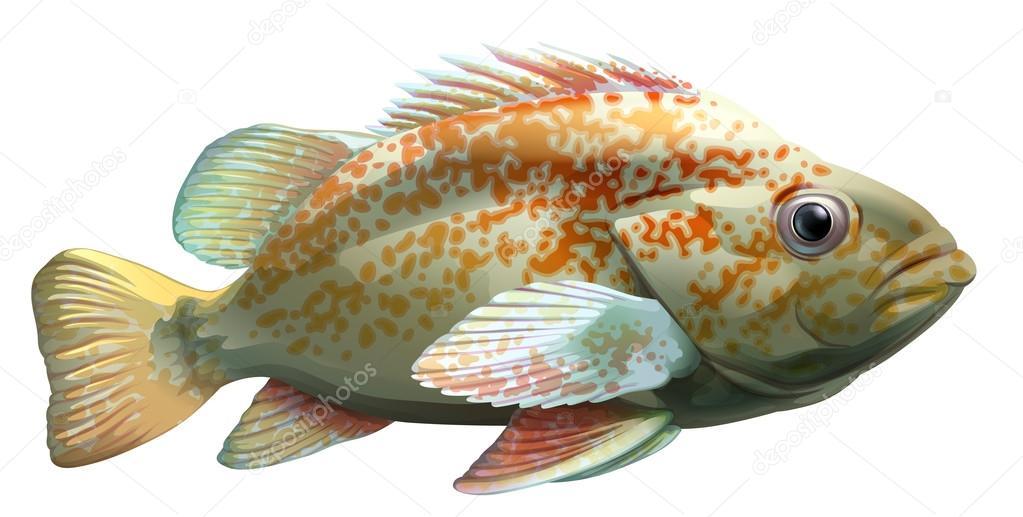 Un pez grande vector de stock blueringmedia 60636195 for Big fish script
