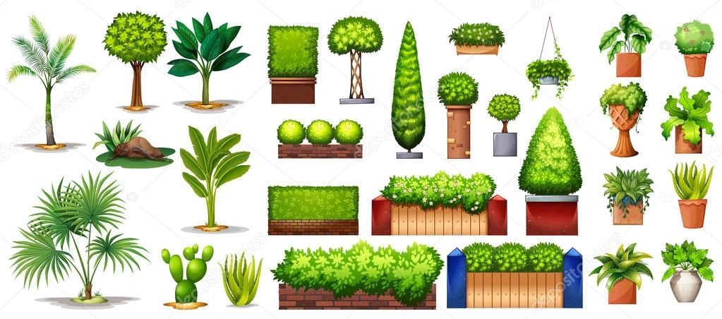 Diferentes Especies De Plantas Vector De Stock