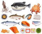 Fotografie Fisch und Meeresfrüchte
