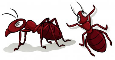 Simple red ants on white