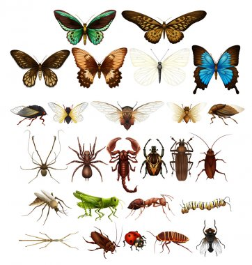 Wild insects in various types illustration stock vector