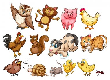 Different type of farm animal and pet