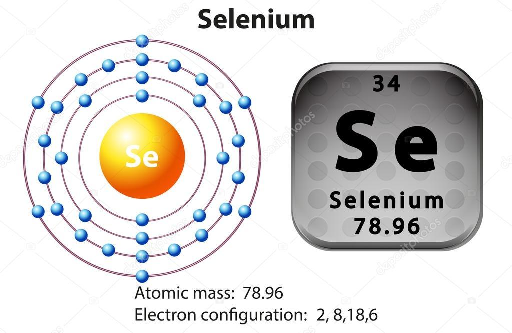 Symbol And Electron Diagram For Selenium Stock Vector