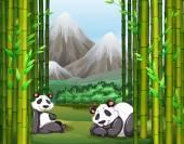Fotografia Panda e foresta di bambù