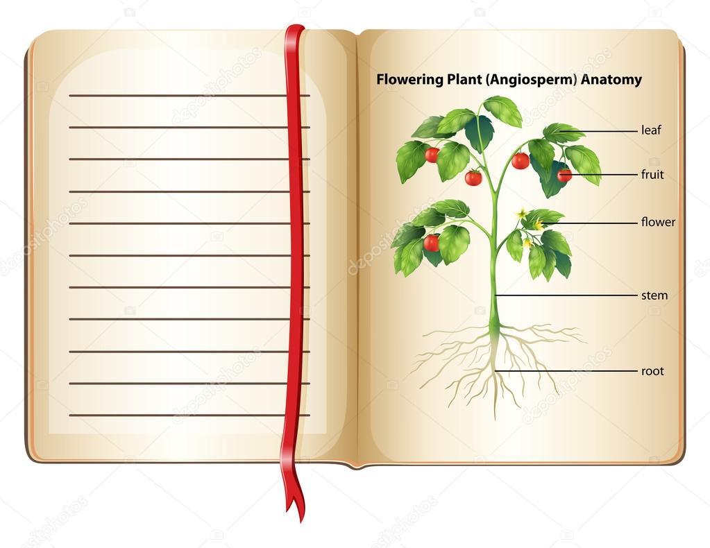 Flowering plant anatomy on page — Stock Vector © blueringmedia #87191924