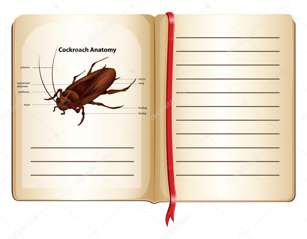 Anatomía de la cucaracha en un libro — Vector de stock ...