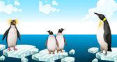 Fotografia Pinguini in piedi sulliceberg