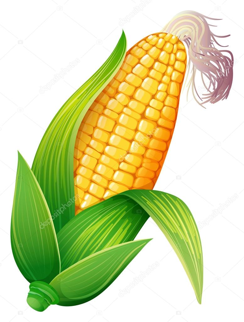 Corn on the cob is not only to eat because