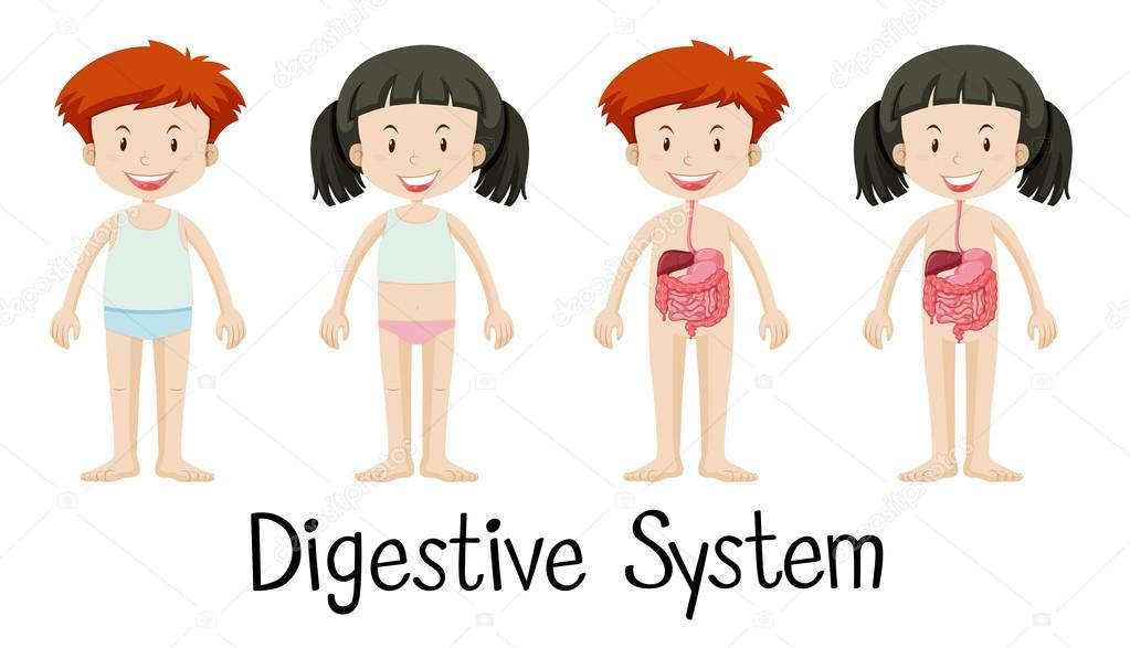 Niño y niña con sistema digestivo — Archivo Imágenes Vectoriales ...