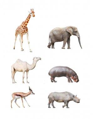 Big african mammals.