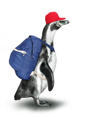 Funny penguin with backpack