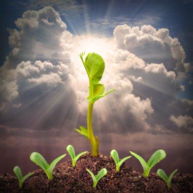 Seedlings growth view