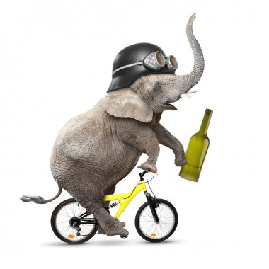 Drunken driver elephant riding a bike