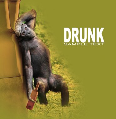 Drunken chimpanzee with hangover after party