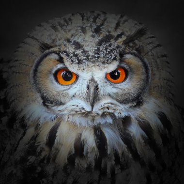 The Eagle Owl, Bubo bubo