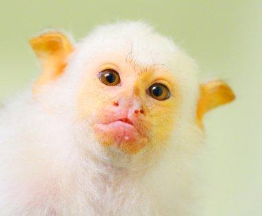 Portrait of funny monkey