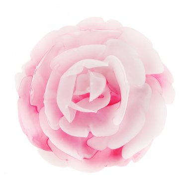 Pink rose flower isolated
