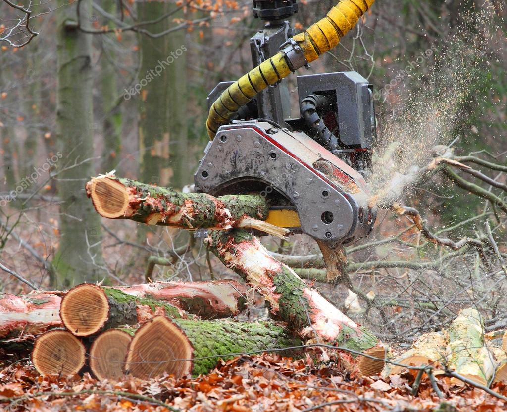 The harvester working in a forest