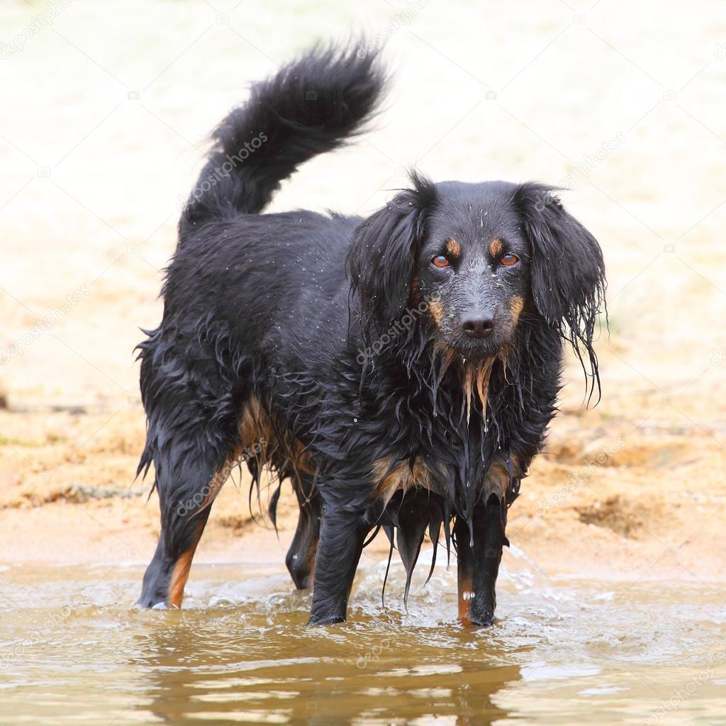 Dog rescuer on the beach.