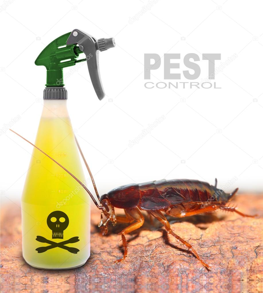 Plastic sprayer with insecticide and big cockroach