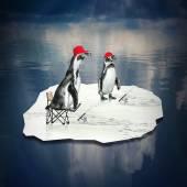 Két pingvinek úszó és halak