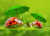 Photo Little ladybugs with umbrellas