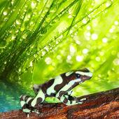 Fotografia la rana dardo velenoso in una foresta pluviale