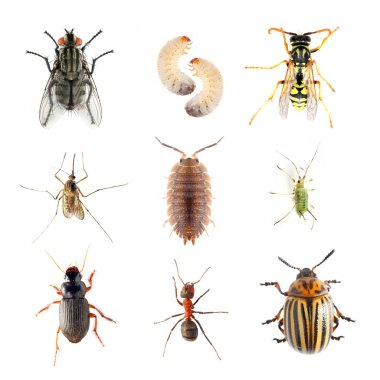 Collection of the insects