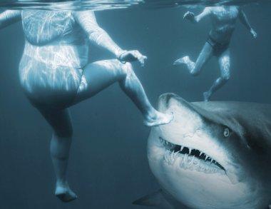 Shark attack. Life insurance concept. stock vector