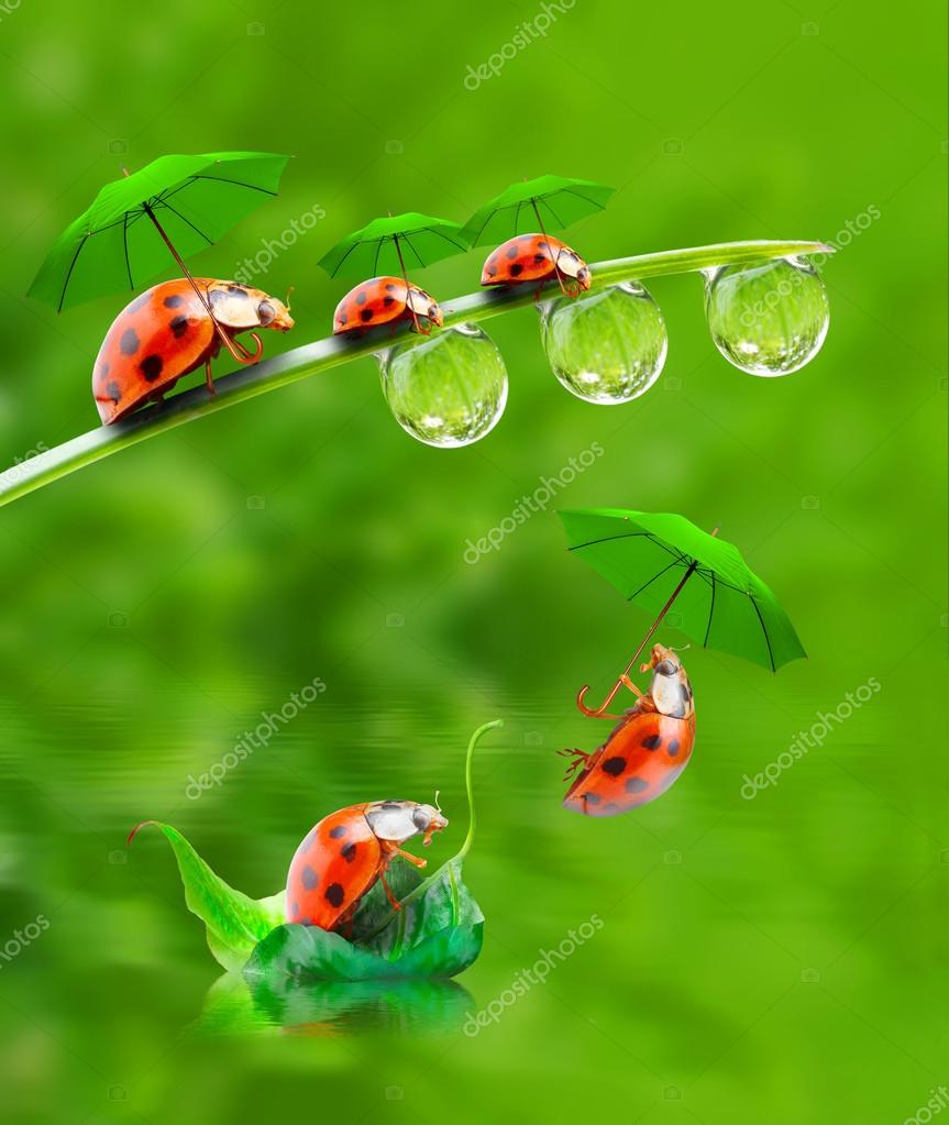 Little ladybugs with umbrella jumping down.