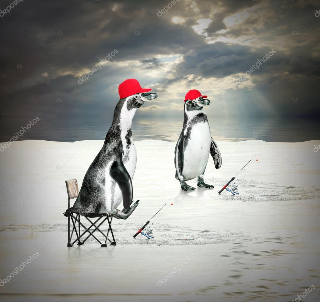 Two penguins floating and catching fish