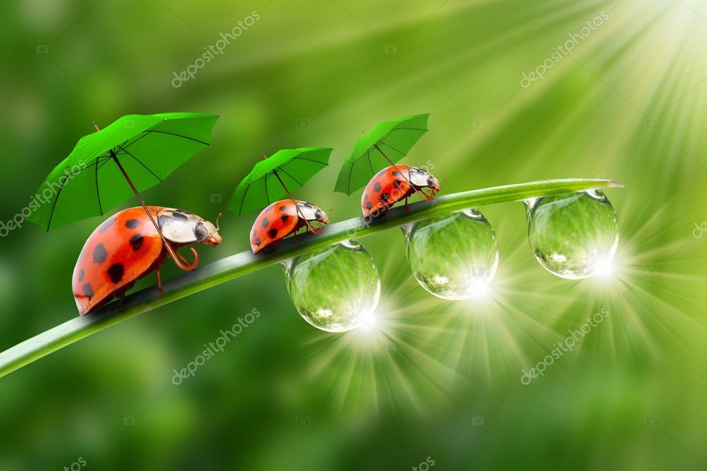 Little ladybugs with umbrellas