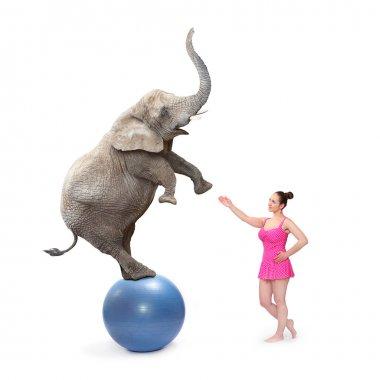 Circus clown girl and elephant