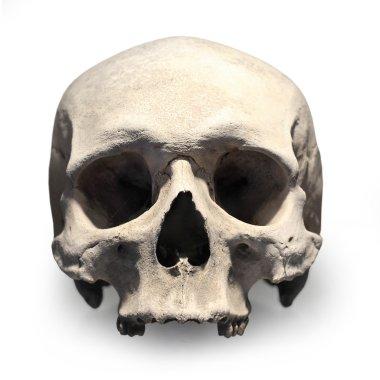 Human skull on white.