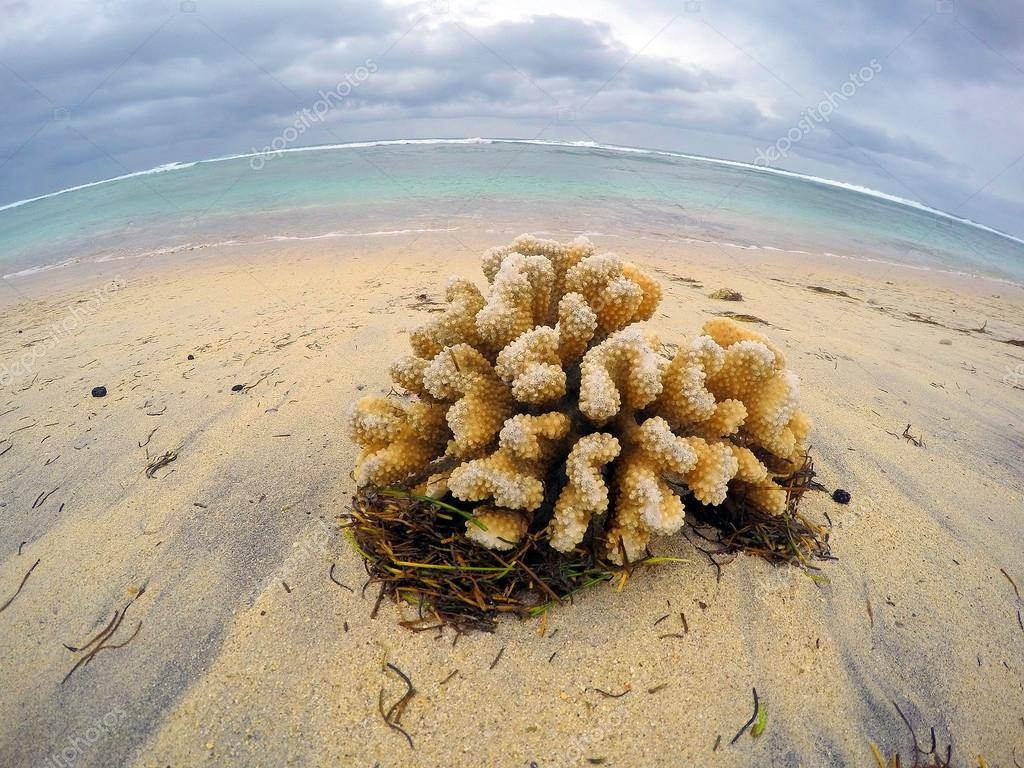 Dead corals on the beach.