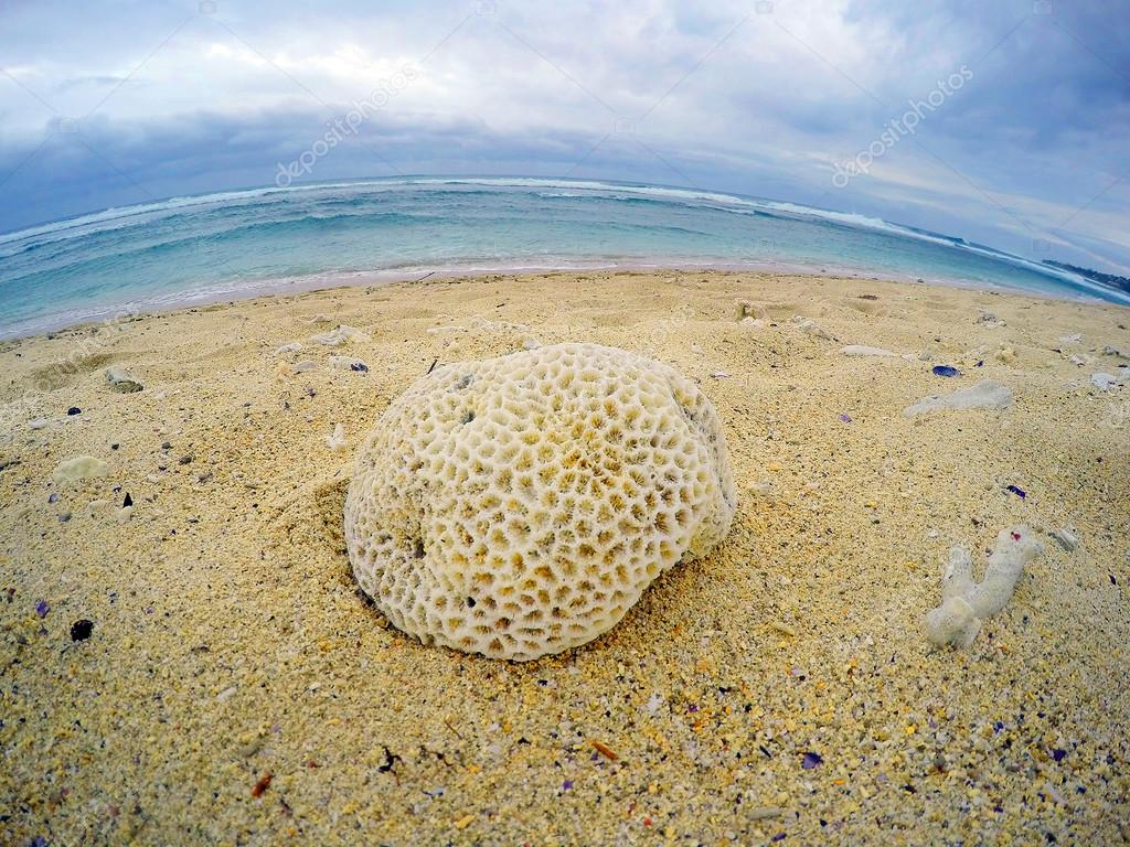 Dead corals on the beach