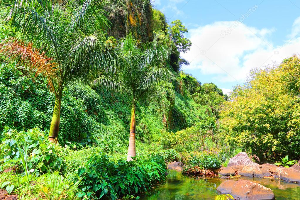 Rainforest on Mauritius Island.