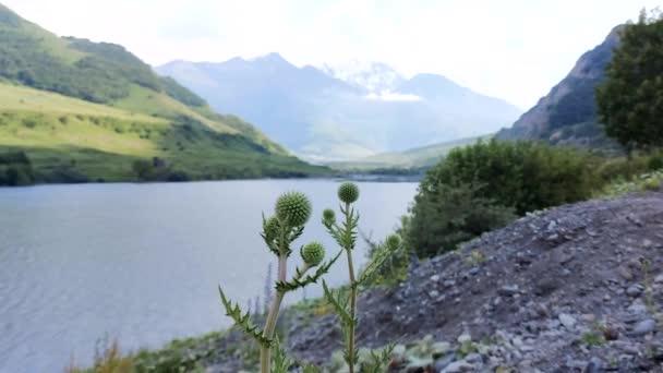 Blumen in Form von Dornen vor dem Hintergrund des Sees und der Berge, der Himmel in den Wolken, Republik Inguschetien, Dargavskoe Schlucht