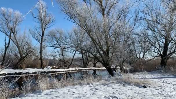 Slunečná zimní krajina na břehu řeky. Vrby pokryté chraplavým mrazem. Řeka Havel v Braniborsku (Německo)