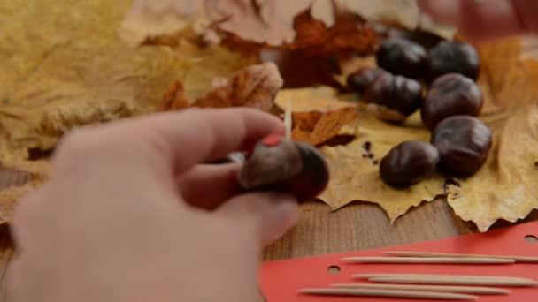 Kaplumbağa Gözünü Kestane şekil Ve Tırtıl Boyama Stok Video