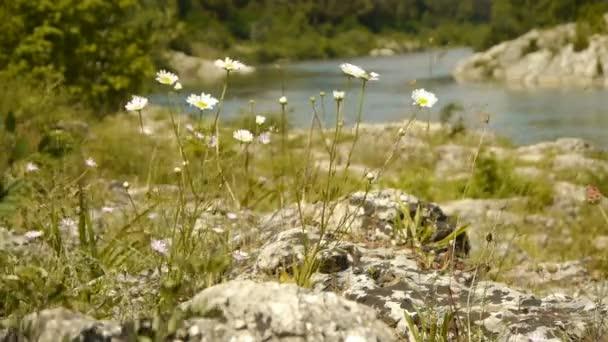 Wild herbs at Gardon river