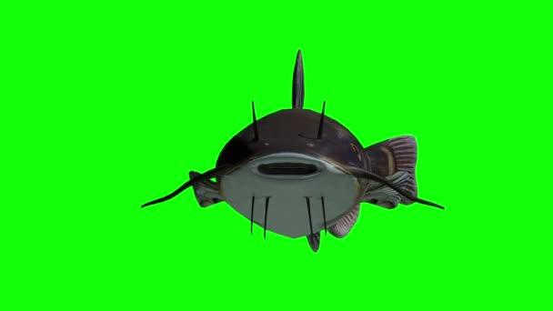 Pesce gatto animato con lo schermo verde