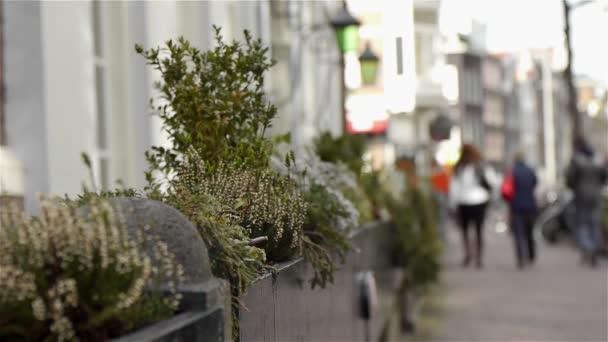Gyógynövények a városban. Amszterdam, Hollandia