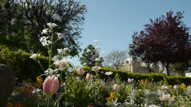 Frühlingsblumen in einem Park