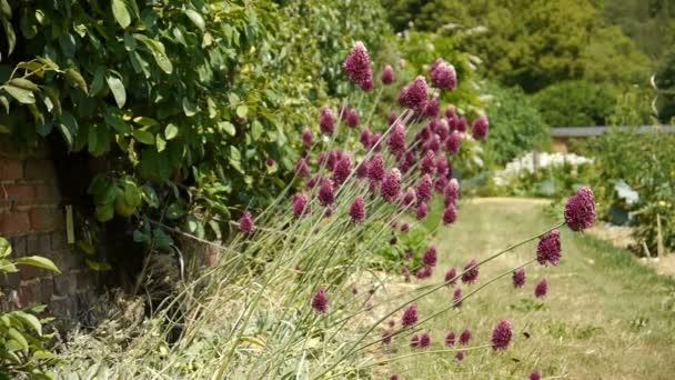 Virágok, egy botanikus kert