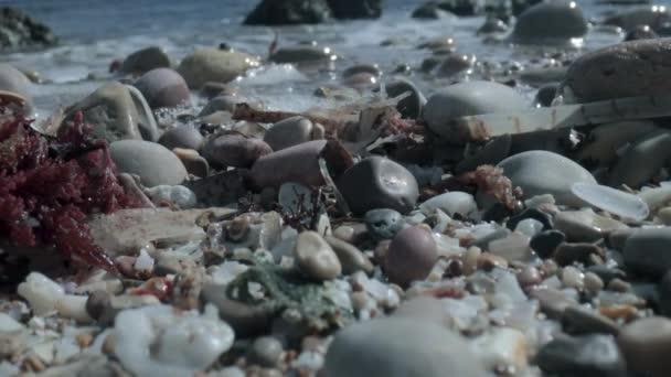 Makro záběry mokrých oblázků na mořském pobřeží