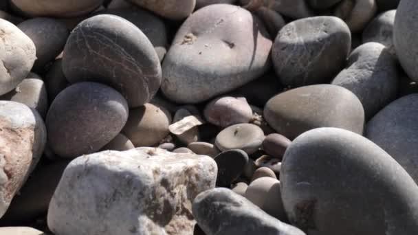 Makro panning záběry mokrých kamenů na mořském pobřeží