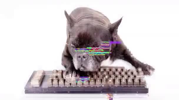 Welpenhacker mit Computertastatur