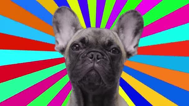 Bulldogge mit psychedelischem Hintergrund